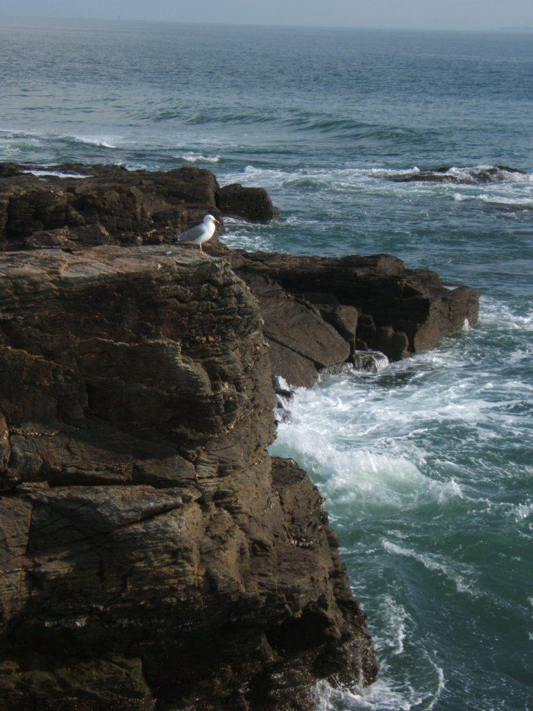falaise, côte atlantique, photographie de Françoise Renaud